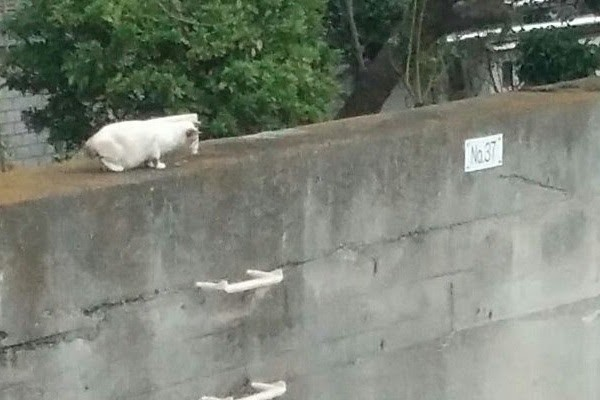 hunter-cat-1